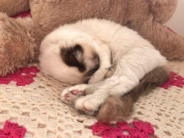 Shakira in a deep sleep