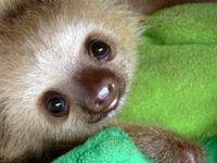 *sad baby sloth eyes*
