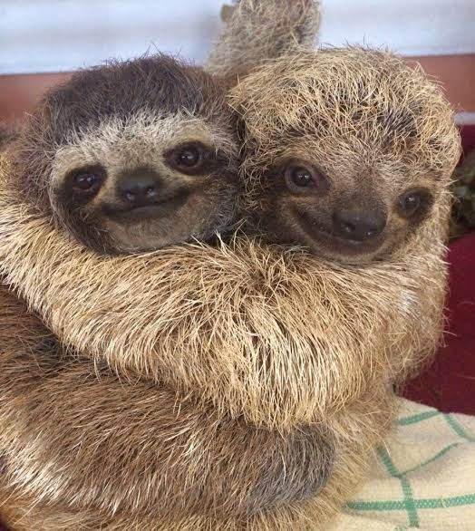 Ooooh yeahhhh, can't you just feel the lovin'? I know you can! And I know you're smiling. If you're not smiling then you should be smiling, so SMILE! Betty and George don't like it when you don't smile. They get sad. And sad sloths aren't as cute so please don't upset them