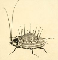 Kornei Chukovskii. Tarankanische [The Terrible Cockroach]. Sergeii Chekhonin- illustrator. Leningrad- Raduga- 1925.jpg