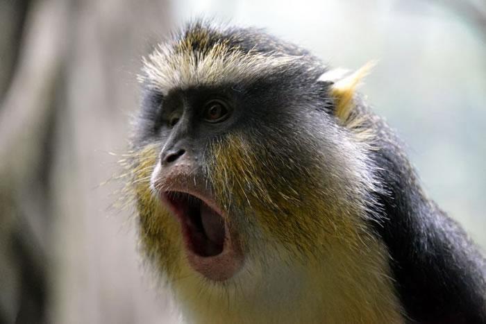 8.-Shocked-Monkey.jpg