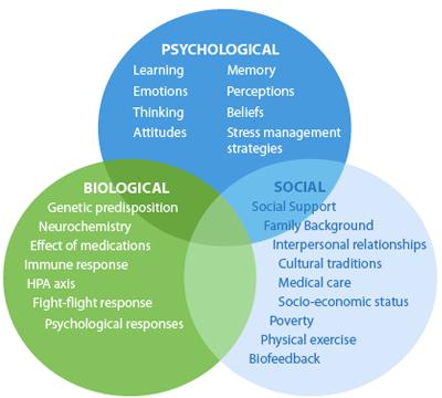 biopsychosocial.png