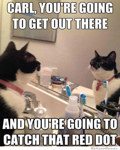 self-motivation-cat-meme.jpg