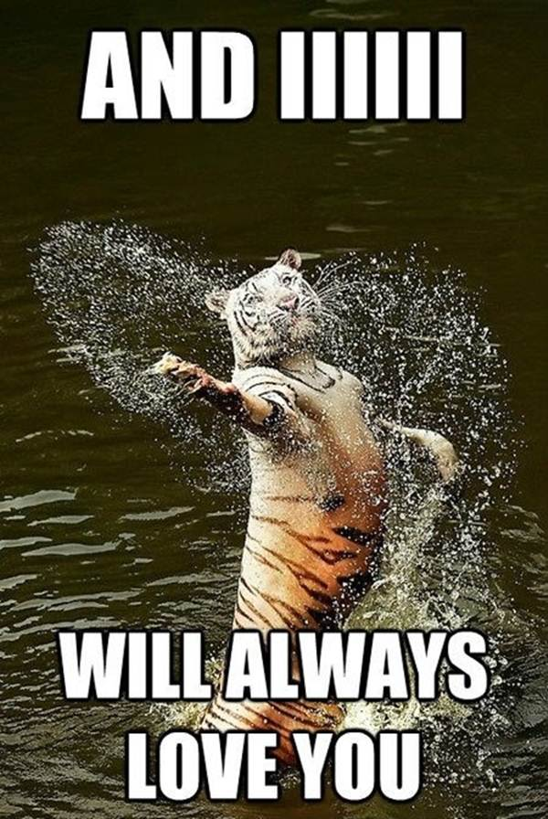 funny-animal-memes-006-008.jpg