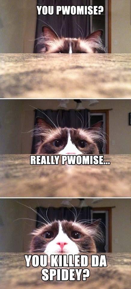 Funny-cat-meme1.jpg