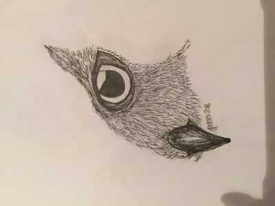 An owl (its sideways for some reason?)