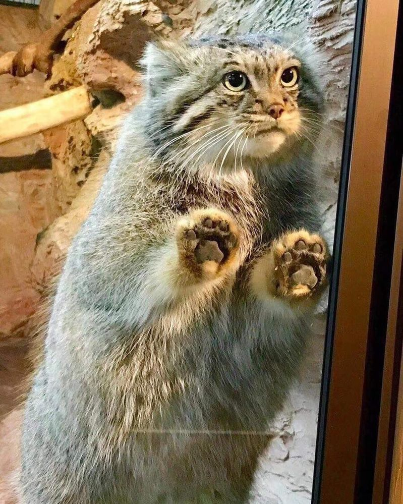 Kitty!!!.jpg