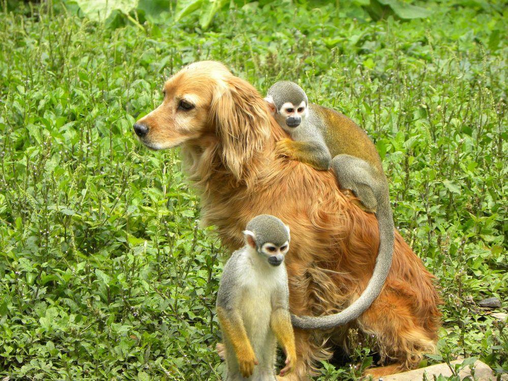 squirrel-monkey-5.jpg