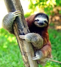 happy sloth.jpg