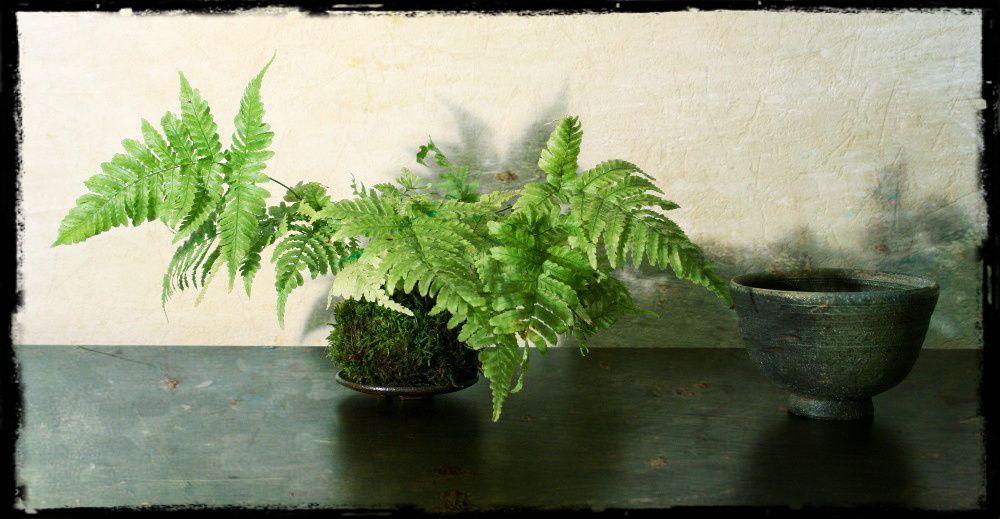 fern-kokedama-easily.jpg