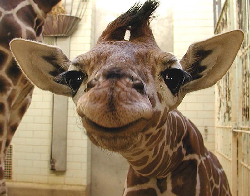 smiling-animals-17.jpg