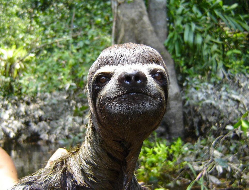 sloths.png