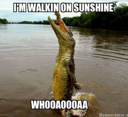 animal-memes-alligator.jpg