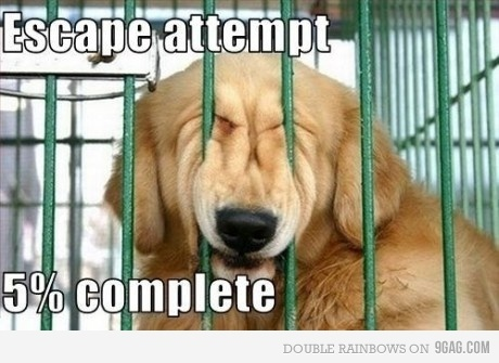 dog-escape-funny-lol-Favim.com-240568.jpg