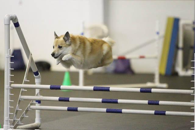 hover-dog-flying-dog-7.jpg