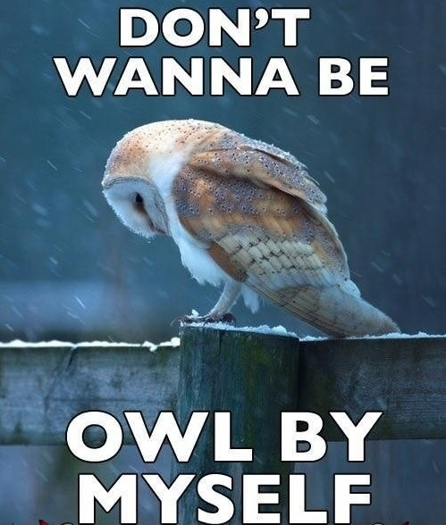 Sad-Owl-Meme-Feels-The-Loneliness-Of-A-Cold-Night.jpg
