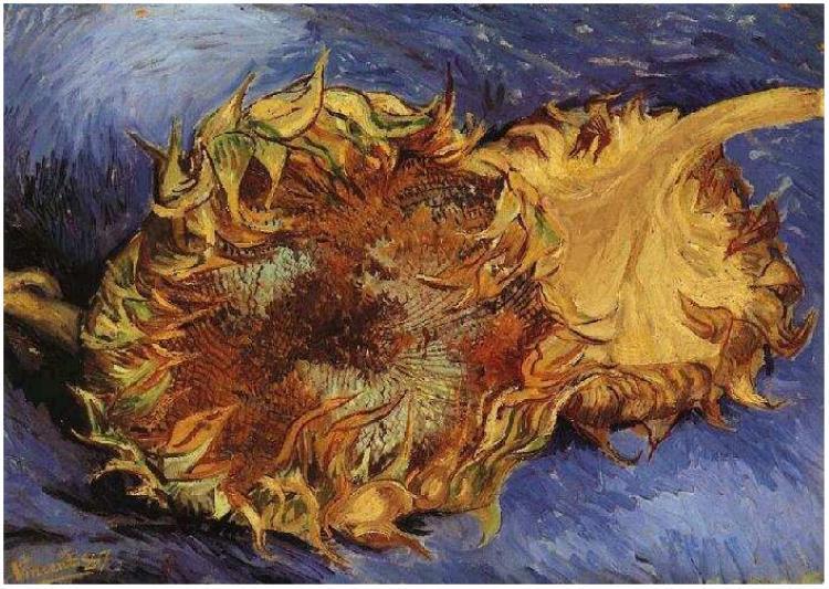 Two-Cut-Sunflowers.jpg