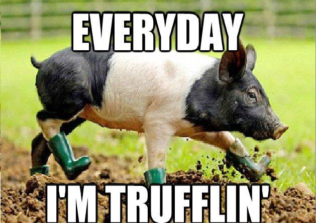 funny-animal-memes-006-017.jpg