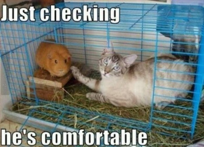 Funny Animal Memes For Adults : Funny animal captions part pics amazing creatures