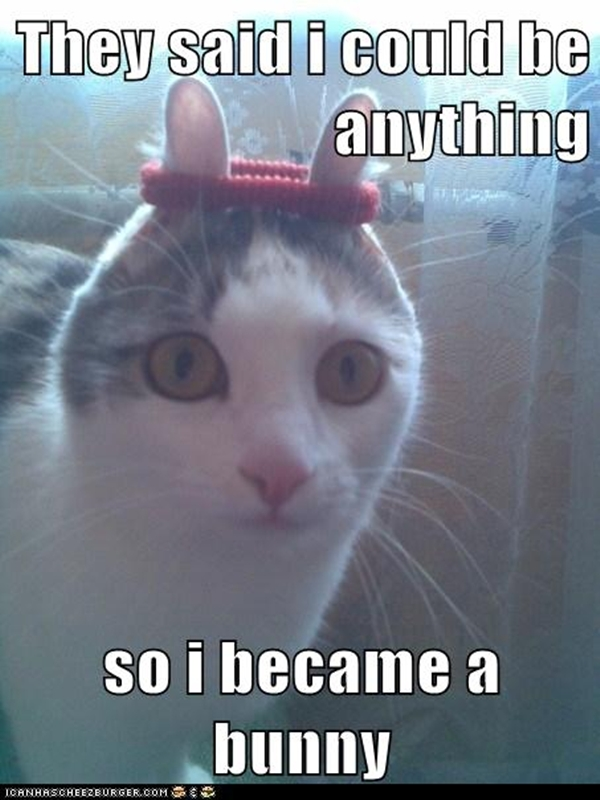 Funny Cat Memes.jpg