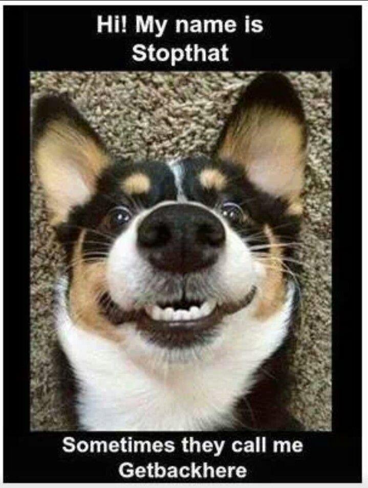 Top-30-Funny-animal-Memes-Memes.jpg