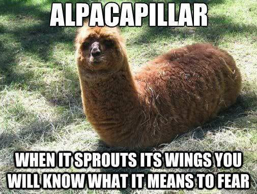 Funniest Animal Memes In The World : Funny animal pictures of the day pics