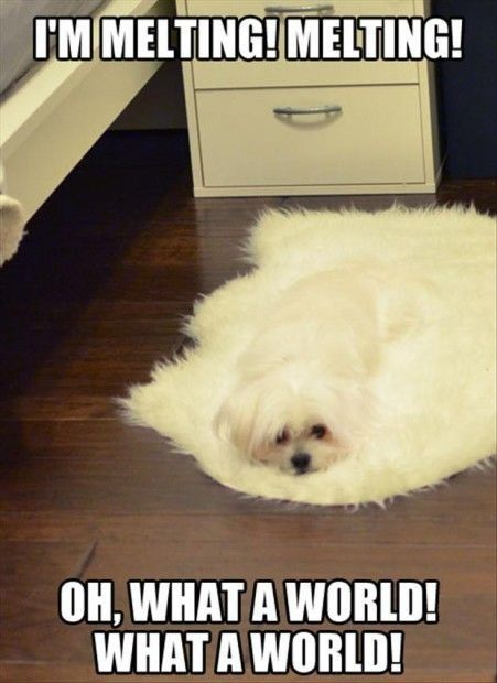Funny-Animal-Memes.jpg