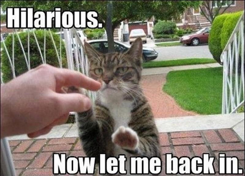 funny-animal-memes-20.jpg