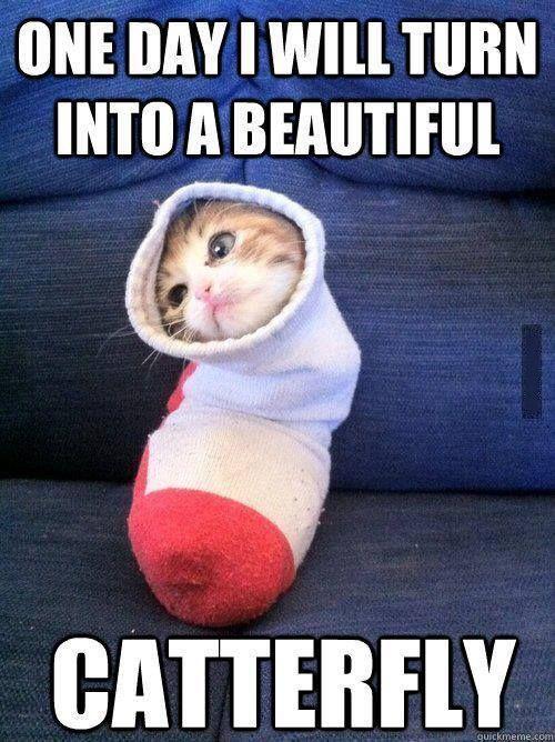 funny-cute-cat-memes.jpg