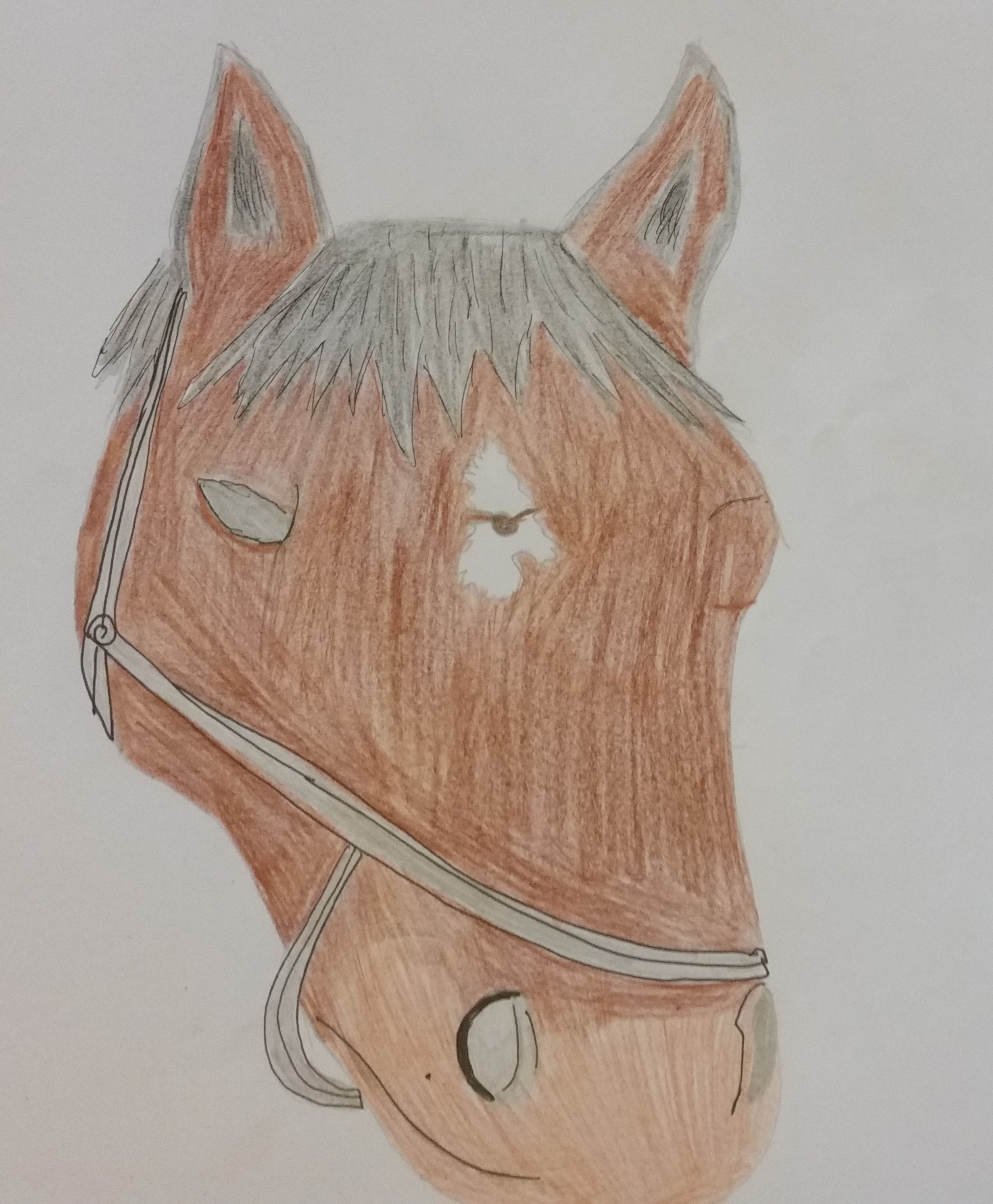coloured horse head.jpg