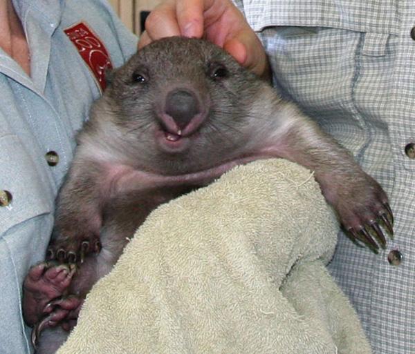 wombat_smiling1.jpg