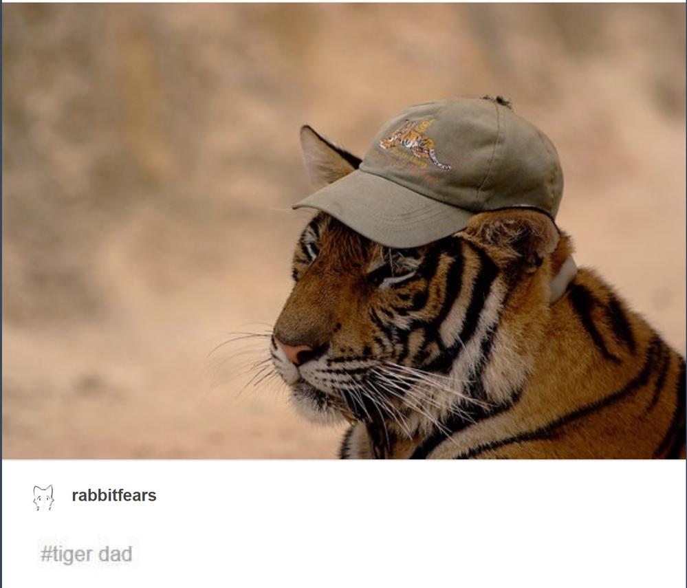 tiger dad.PNG