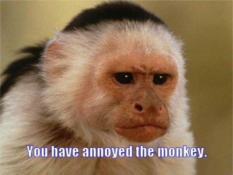 annoyed monkey.jpg