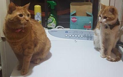 catt (1).jpg